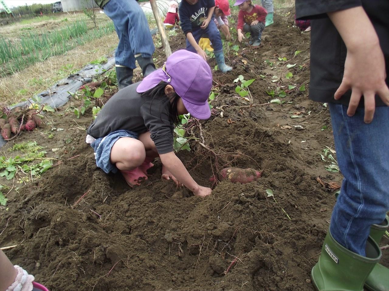手で、土を掘ると・・・・・