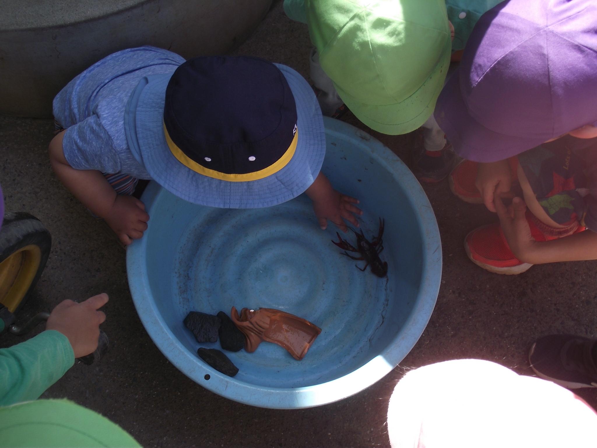 みんな興味津々。手を伸ばして、触ってみたりしました。『ぬるぬるしてるね』と言ってました。
